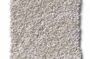 Carpet Diem Sample